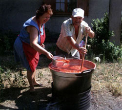 camp_conserva_pomodori2.jpg